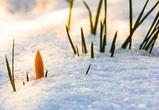 Потепление и снег обещают синоптики в выходные в Воронежской области