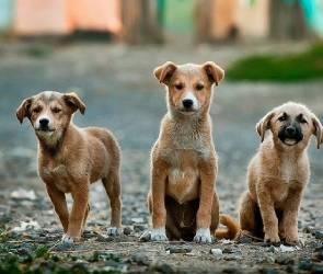 Бизнес хотят привлечь к строительству приютов для бездомных животных в Воронеже