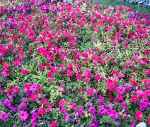 В Воронеже на благоустройство цветников и газонов направят 25 млн рублей