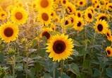 В Воронежской области построят завод по производству и хранению семян