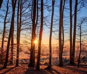 До 15 градусов тепла обещают синоптики на рабочей неделе в Воронеже