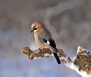 Воронежцев попросили не покупать диких птиц на Благовещение