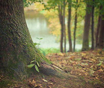 К 2024 году в Воронежской области посадят более 2 тысяч га новых лесов