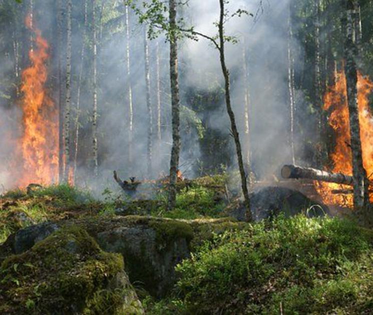 Издано постановление о введении противопожарного режима в Воронежской области