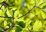 Синоптики пообещали воронежцам лето в апреле