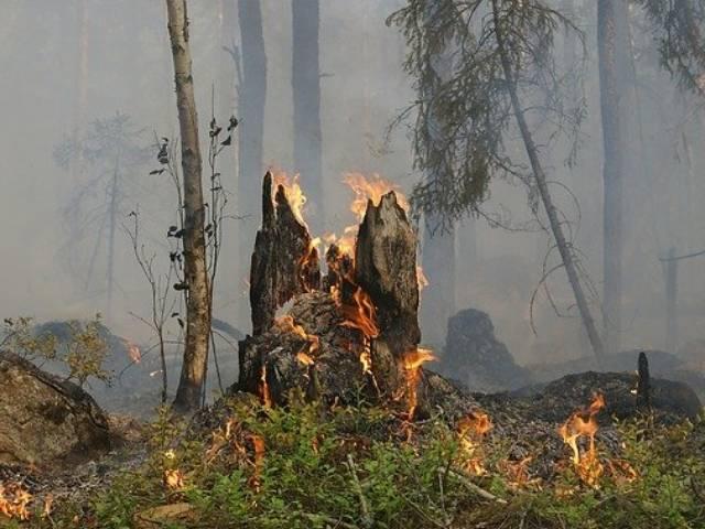Спасатели сообщили о взрывном росте пожарной опасности в Воронежской области