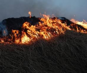 МЧС: ситуация по  пожарам в Воронежской области стремительно ухудшается