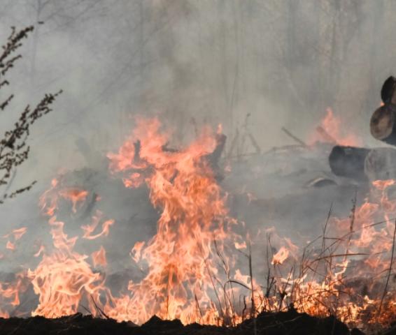 СК проведет проверку по фактам возникновения пожаров в Воронежской области