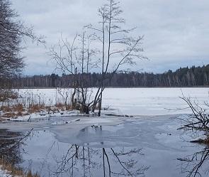Связи между гибелью черепах в озере на Маклоке и загрязнением Усманки не нашли