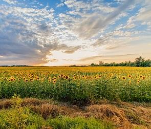 Воронежская область стала лидером страны по объему инвестиций в АПК