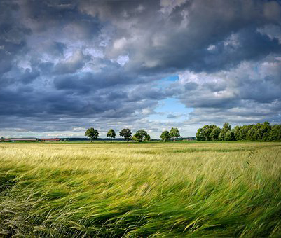 Жителей Воронежа снова предупредили о сильных порывах ветра