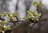 На последней рабочей неделе апреля синоптики обещают воронежцам снег и дождь
