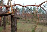В Воронеже из-за сильного ветра упали 7 деревьев и повредили машины на парковке