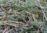 О возможных майских заморозках предупредили синоптики воронежцев