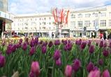 В Воронеже в этом году появится около 200 цветников