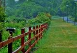 Дожди и похолодание ожидаются на первой неделе лета в Воронеже