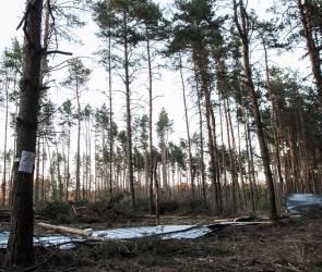 Губернатор подписал указ о признании Северного леса памятником природы