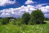 Аномально жаркая и сухая погода ожидается на рабочей неделе в Воронеже