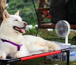 Воронежцы смогут на время отдохнуть от невыносимой жары