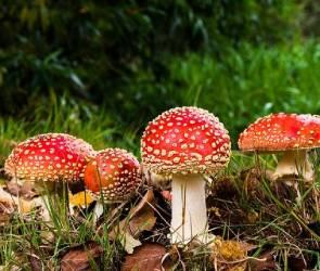 В Воронежской области четыре человека отравились ядовитыми грибами