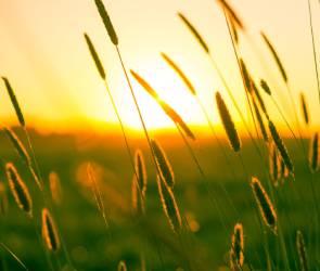 В выходные воронежцам обещают комфортную солнечную погоду