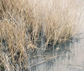 В реке в Воронежской области обнаружили массовый замор рыбы