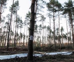 Северный лес в Воронеже планируют благоустроить до середины 2023 года