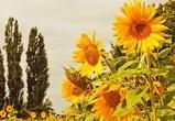 Обанкротившийся богучарский завод растительных масел вновь не смогли продать