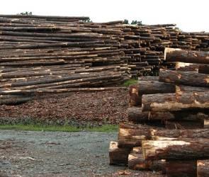 Воронежцы пожаловались на опасную лесопилку в области
