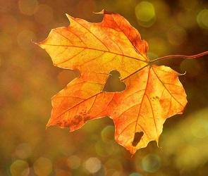 Первые выходные сентября в Воронеже будут холодными и дождливыми