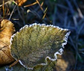 Первые заморозки: в Воронежской области температура опустится до -2 градусов