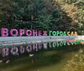 В Воронеже стартовал фестиваль «Город-сад»