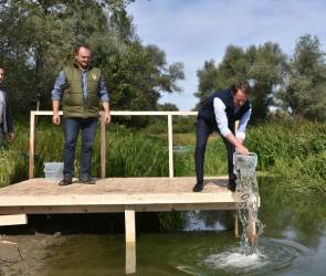 В реку Дон под Воронежем выпустили 10 тысяч мальков краснокнижной стерляди