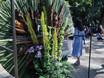 Фестиваль «Город-сад» - 2021 196345