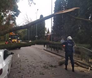 Упавшее на машину в Воронеже дерево, ставшее причиной гигантской пробки, убрали