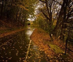 Последние сентябрьские выходные в Воронеже будут дождливыми