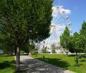 Для озеленения Воронежа власти закупят крупномерных деревьев на 9 млн рублей