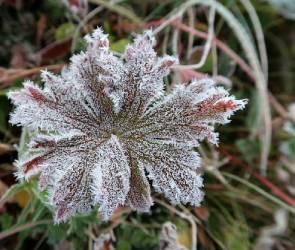 В Воронежской области температура опустится до -3 градусов мороза