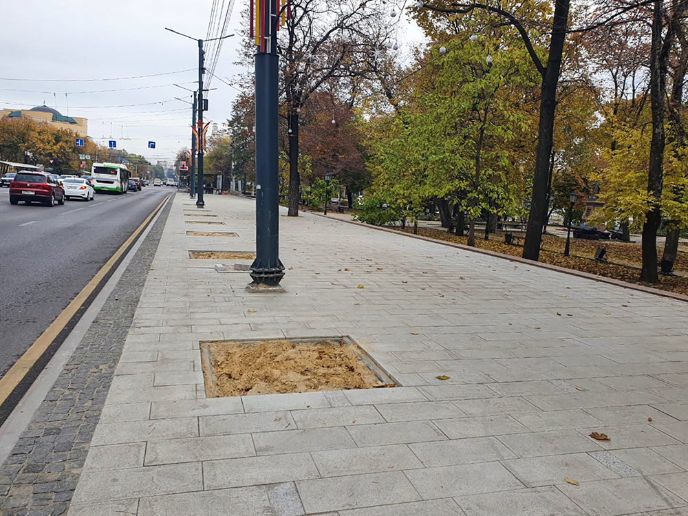В конце октября на проспекте Революции в Воронеже высадят клёны