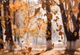 В Воронеж придет потепление к концу следующей недели